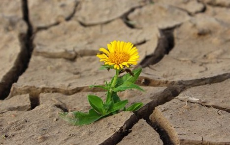 resiliencia resilient resilience strenght optimism flower desert nature naturaleza