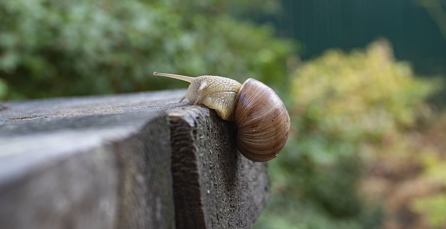 snail resiliencia resilience resilient naturaleza nature